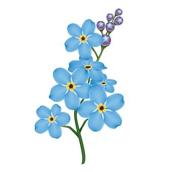 현실적인 푸른 물망초 꽃.