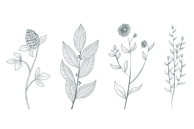 Realistic botanical wild flowers