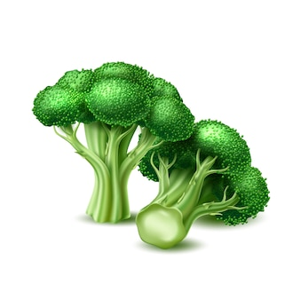 Realistic broccoli cabbage vegetable