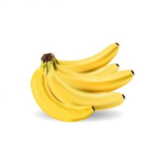 Realistic bunch of banana vector
