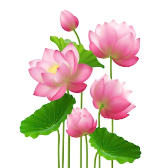 Realistic bunch lotus flowers
