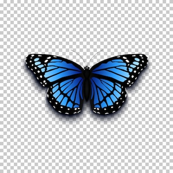 Realistic butterfly icon. perfect for your presentration.