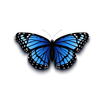Realistic butterfly icon  on white background.