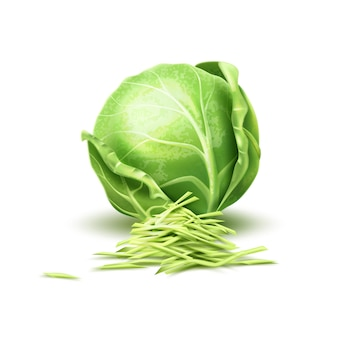 Realistic cabbage vegetable