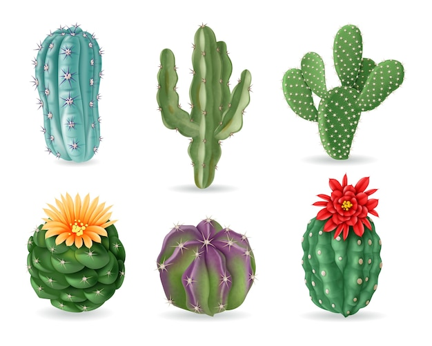 Realistic cactuses