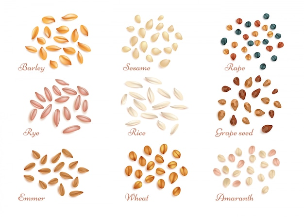 Realistic cereal grains and oil seeds vector set