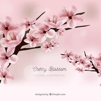 Realistic cherry blossom background design