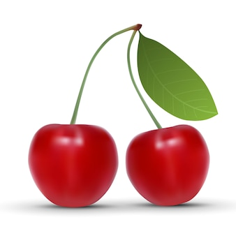 Realistic cherry isolated on white