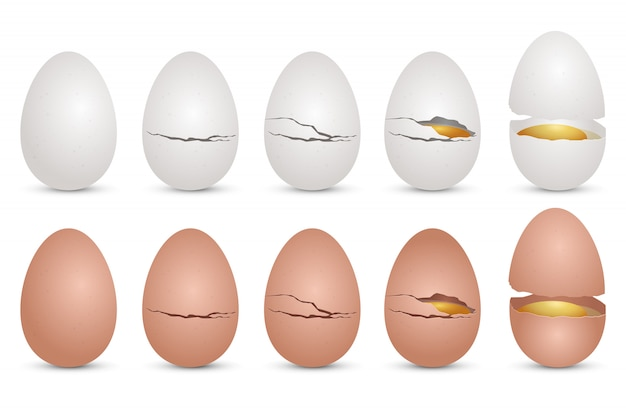 현실적인 치킨 계란 디자인 일러스트 레이 션 흰색 배경에 고립