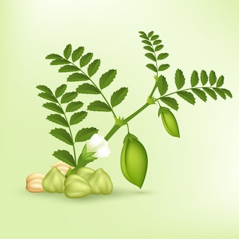Реалистичные бобы нута с листьями