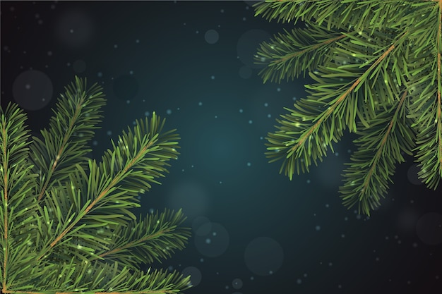 Realistic christmas tree branches background
