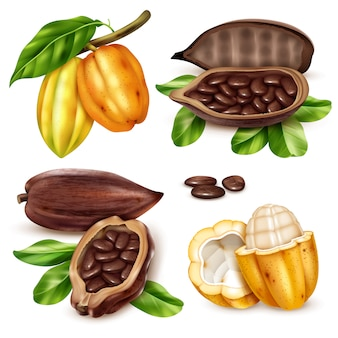 Realistic cocoa icon set
