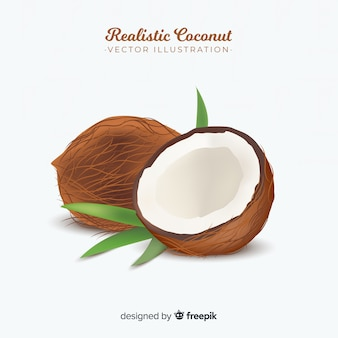 Realistic coconut illustration
