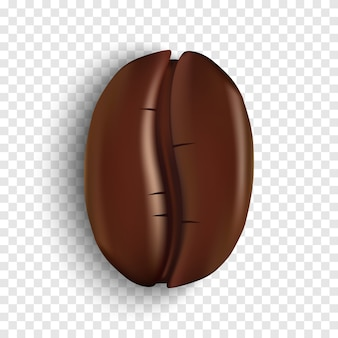 Realistic coffee bean on transparent