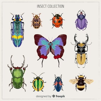 Realistic colorful bug collection