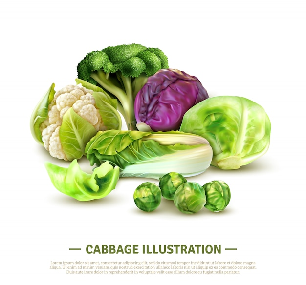 Realistic composition with white cabbage and scotch kale heads chinese leaves brussels sprouts broccoli and cauliflower