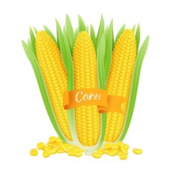 現実的なトウモロコシの穂軸。トウモロコシの粒と白い背景の上の葉を持つ穂軸