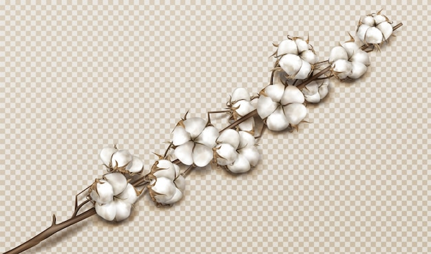 Realistic cotton branch with flowers and stem