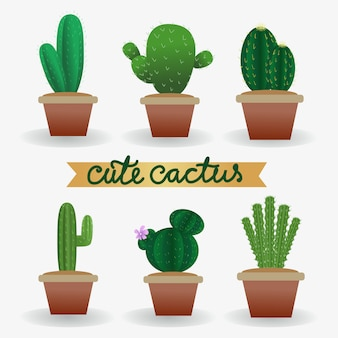 Realistic cute vector cactus plant in pot collection