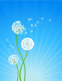 Realistic dandelions in the wind background