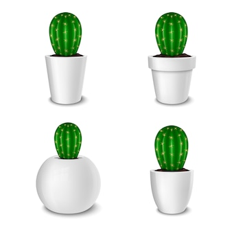 Realistic decorative cactus plant in white flower pot icon set closeup isolated on white background.