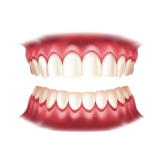 Realistic dentures for dentistry and orthodontics design