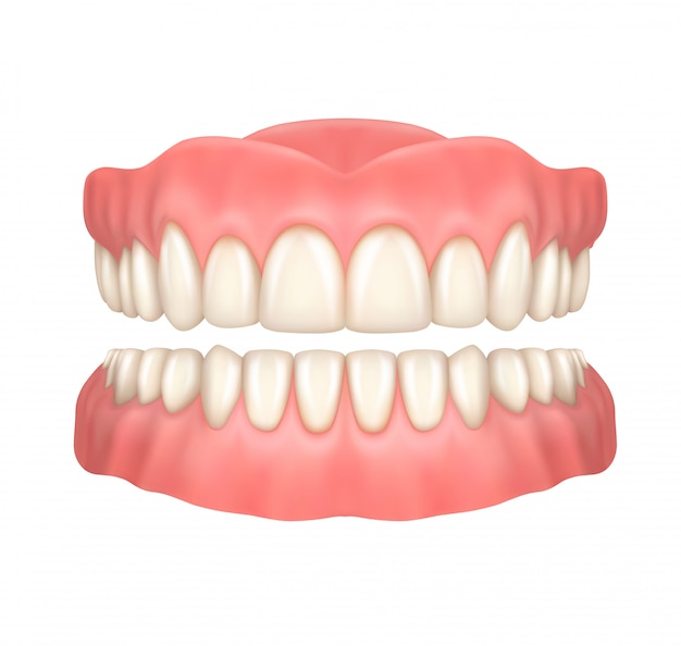 Realistic dentures or false teeth