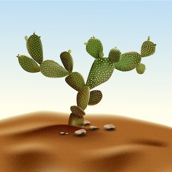 現実的な砂漠のサボテンのウチワサボテン。生息地の砂と岩に囲まれた砂漠のウチワサボテン植物。