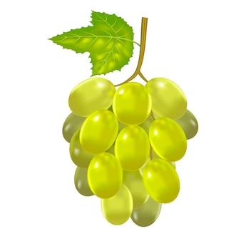 Реалистичные подробные свежий зеленый гроздь винограда сезонных сельскохозяйственных фруктов для меню ресторана. векторная иллюстрация