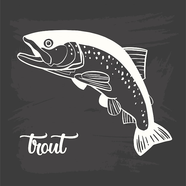 Realistic drawing on a blackboard of the trout