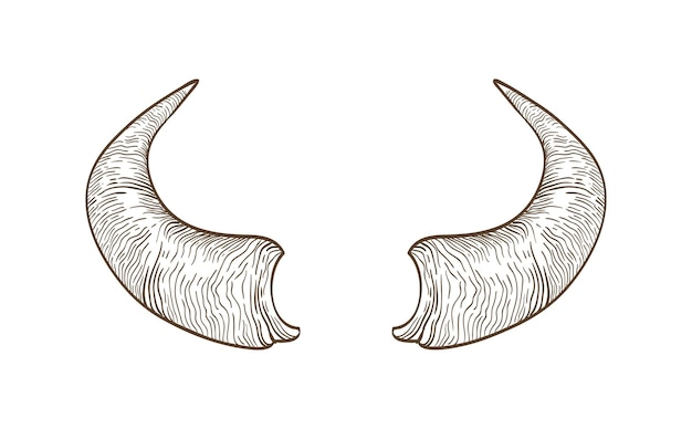 Realistic drawing of horns of cow, bull, bison, buffalo or other bovine animal hand drawn with contour lines on white