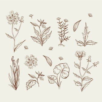 Realistic drawing with wild flowers and herbs