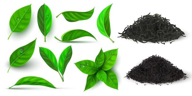 홍차와 녹차를 위한 현실적인 건조하고 신선한 잎. 3d 허브 잎과 이슬이 있는 지점. 천연 건조 차 더미 벡터 세트입니다. 뜨거운 음료, 녹색 새싹 생산을 위한 식물 잎