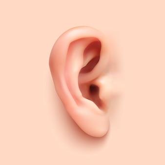 현실적인 귀 그림입니다.