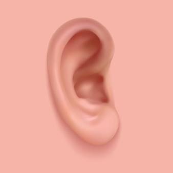 現実的な耳のベクトル