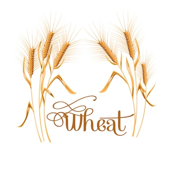 Realistic ear of wheat on white background.