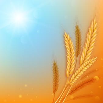 Реалистичные уши пшеницы на фоне абстрактного голубого неба и желтого поля