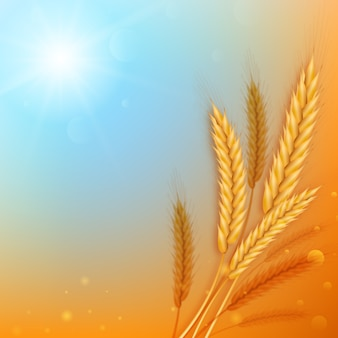Realistic ears of wheat against the background of an abstract blue sky and yellow field