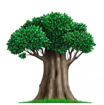 Realistic fairy old oak tree