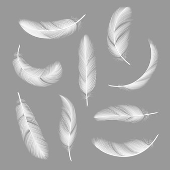 Realistic feather set