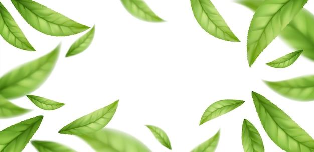 Реалистичные летающие падающие листья зеленого чая на белом фоне. фон с летающими зелеными весенними листьями. векторная иллюстрация