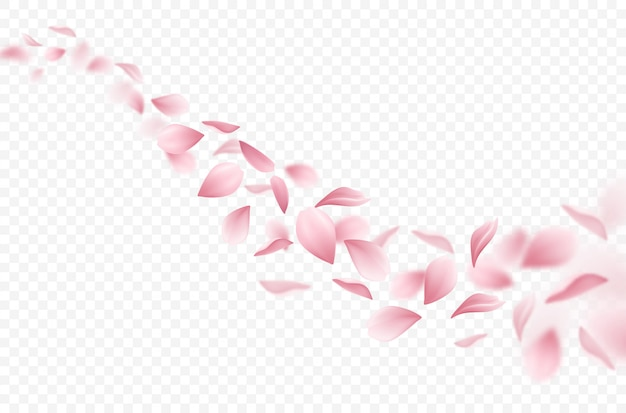 Realistic flying sakura petals illustration