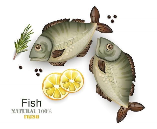 Realistic fresh fish isolated on white