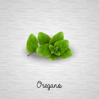 Realistic Fresh green oregano