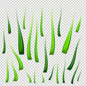 Realistic fresh green vector grass set