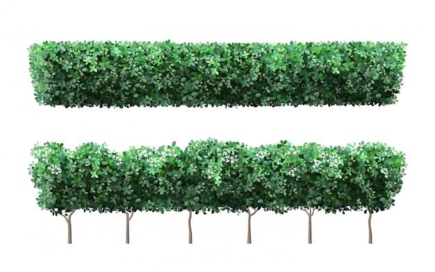 現実的な庭の植物のフェンス。自然の緑の季節の茂み、樹冠の茂みの葉、かわいい花と緑のフェンス。庭の低木イラストセット。公共の公園と庭園の要素