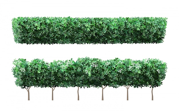Realistic garden plant fence. nature green seasonal bushes, tree crown bush foliage and green fence with cute flowers. garden shrub  illustration set.  public park and garden elements