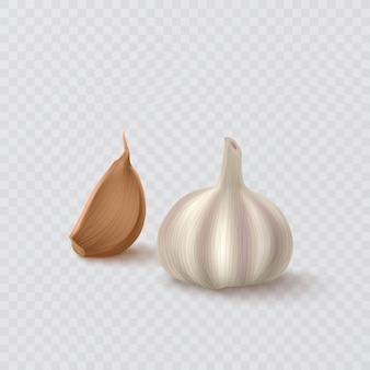 Realistic garlic isolated