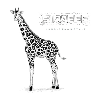 Realistic giraffe vector, hand drawn animal illustration