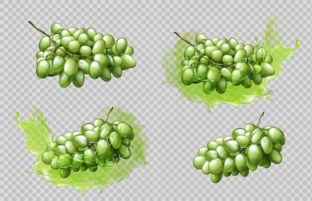 Realistic grapes bunches and splashes set